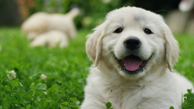Fun facts about some of our favorite four-legged fur babies