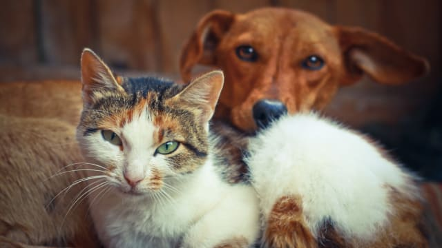 Check out  how much you really know about the household pets in your life