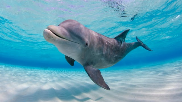 A pril 14th is National Dolphin Day... Are you prepared?