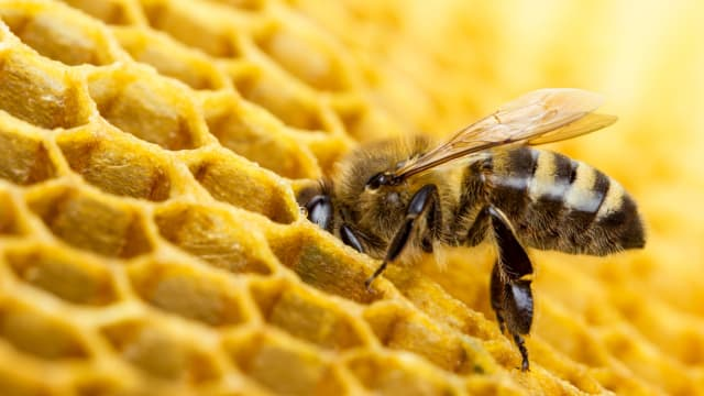 According to the WWF, nearly  90% of wild plants and 75% of global crops depend on pollinators like bees . That means that one of every three bites of food we eat are brought to us courtesy of honey bees and friends.  But how much do you appreciate the work of these buzzing bees? World Bee Day is a chance to give a hand to our pollinating friends, and in recognition of this holiday we've put together a quiz to challenge you to see how much you  really  know about these hard-working insects: